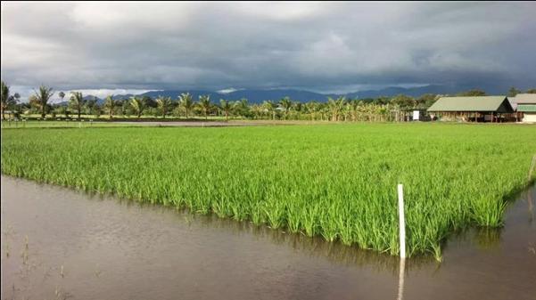 新沂市稻麦推广示范基地获批江苏省农业科技综合示范基地