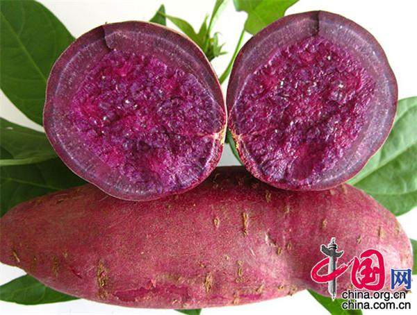 江苏新沂优化产业,推进甘薯绿色产业